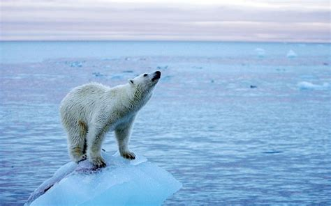 climate change is a problem but our attempts to fix it could be worse than useless telegraph