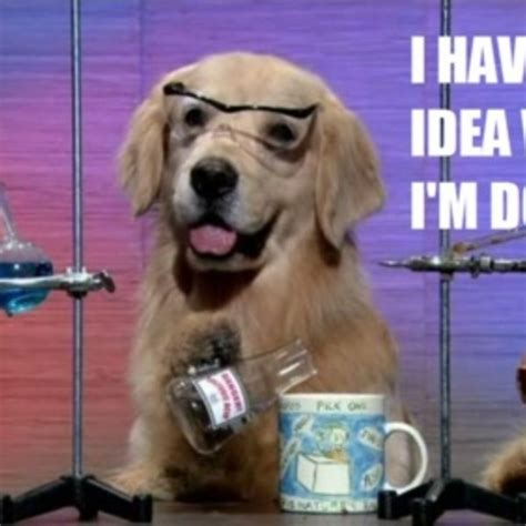 Chemistry Dog Meme - 9 dogs who have no idea what they re doing from memes and