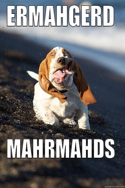 Derp Dog Meme - derp dog meme www pixshark com images galleries with a