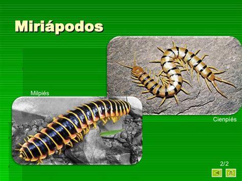 imagenes de animales invertebrados acuaticos los animales concepto y su clasificacion