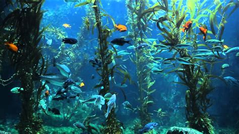 kelp bed kelp bed 28 images kelp bed nature pinterest kelp bed flickr photo sharing