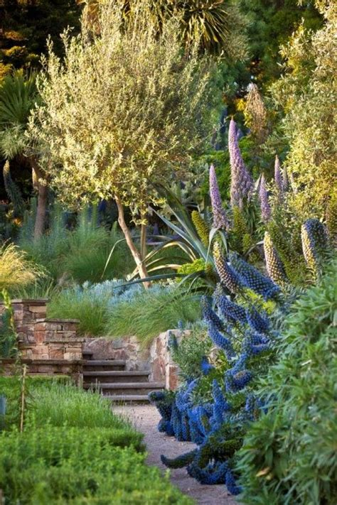 25 best ideas about coastal gardens on pinterest beach gardens beach style live plants and