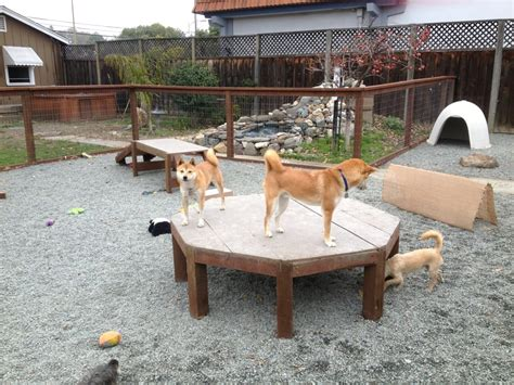 play with puppies near me on the play structures in small play area yelp