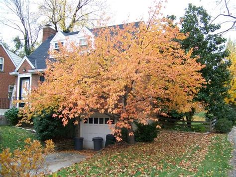 45 best images about replacement tree project on