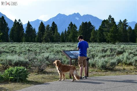 500 Ft To Miles visiting grand teton national park with dogs