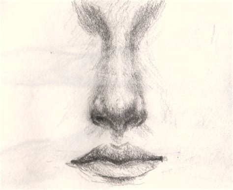 Drawing Noses by How To Draw An Nose