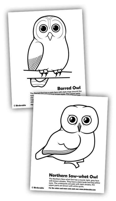 barred owl coloring page new coloring pages barred owl and northern saw whet owl