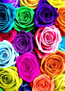 rainbow colored roses rainbow roses color color splash quot c quot