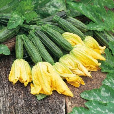 da fiore zucchino da fiore