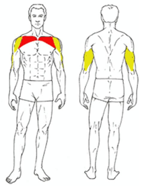 muscles used in incline bench press incline bench press gymjp com