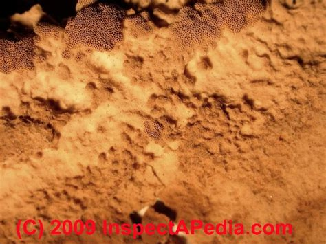 brown mold in bathroom auto forward to correct web page at inspectapedia com