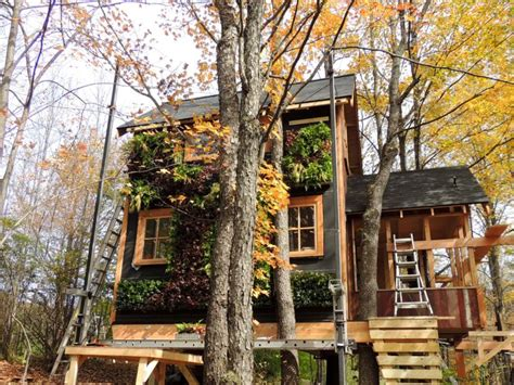 treehouse living greenroofs com projects treehouse masters temple residence