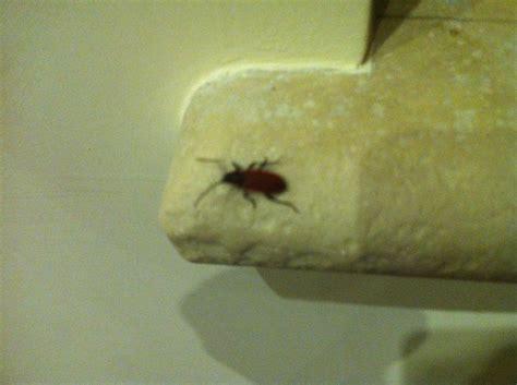 insetti volanti in casa insetti volanti in casa pestforum