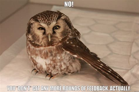 killer owl killer owl quickmeme