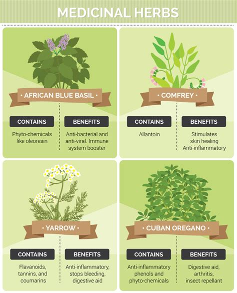 types of garden herbs growing medicinal herbs and plants at home fix