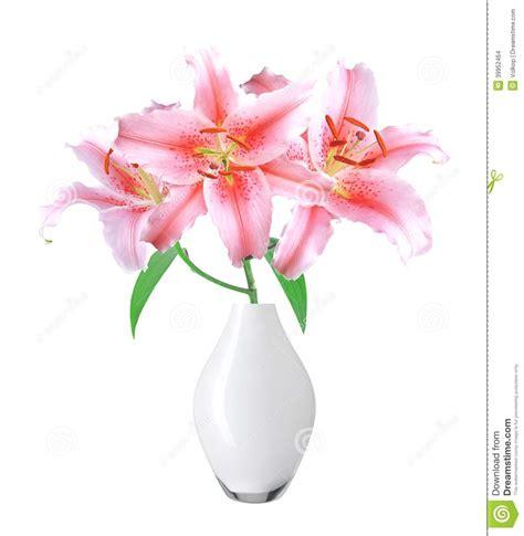 rosa in vaso bello giglio rosa in vaso su fondo bianco fotografia stock