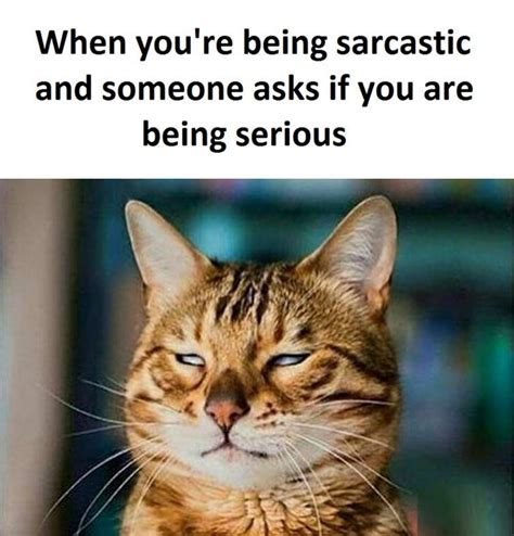 sarcastic funny pictures quotes memes funny