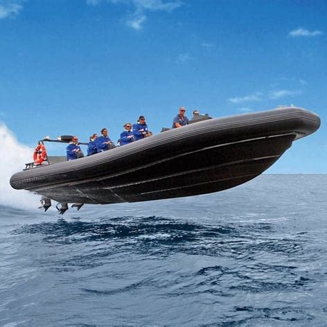whale watching cruise sydney fast boat ride 2 hours - Fast Boat Sydney Harbour