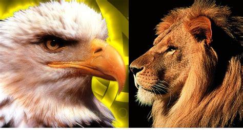 duelo  muerte del leon  el aguila hoy en el quisqueya