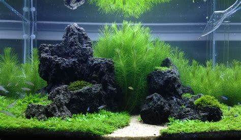 aquascape reddit 17 best images about aquascape on pinterest african