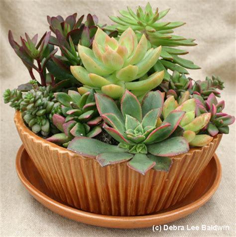 Succulent Centerpieces Succulent Plant Centerpiece