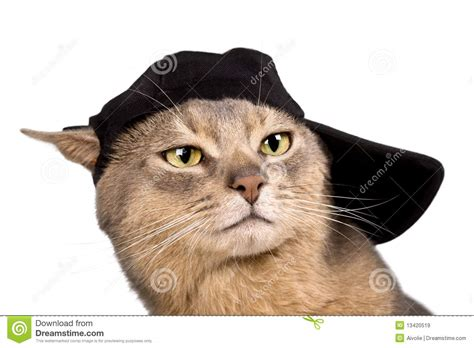 Abyssinian Cat In Baseball Cap Royalty Free Stock Images ...