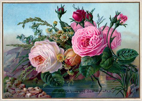 public domain vintage image stunning roses