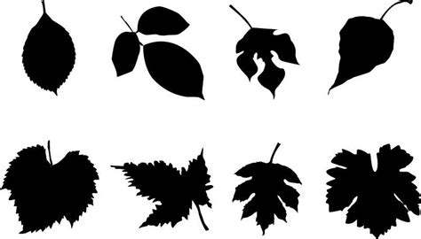 Leave Set autumn leaves silhouette set in black vector