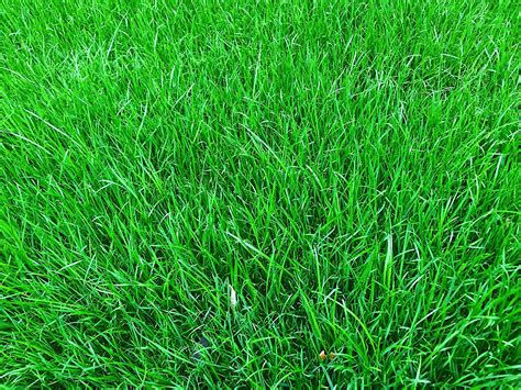 Grass Seed by 1kg Grass Seed Covers 35 Sqm Premium Quality Grass Seed