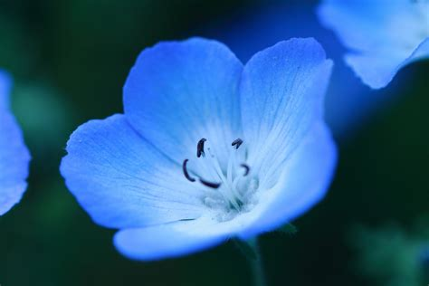 violets are blue violets are blue crezalyn nerona uratsuji flickr