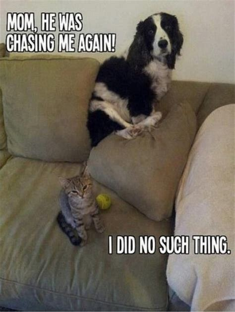 Internet Cat Meme - the reason the internet exists cats unhinged magazine