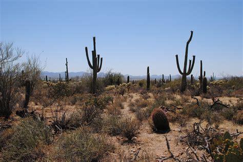 arizona sonora desert museum saguaro national park jc