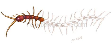 human centipede tattoo human centipede