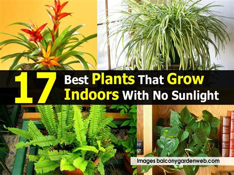 indoor trees that don t need indoor plants that don t need sunlight 17 best plants that