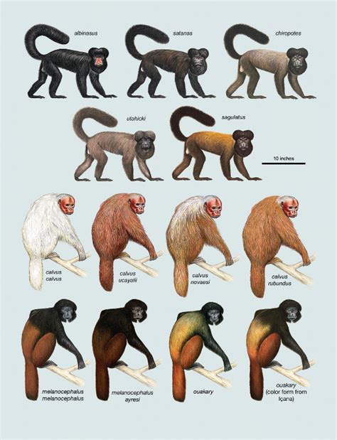 Pictures And Names Of Different Types Of Monkeys