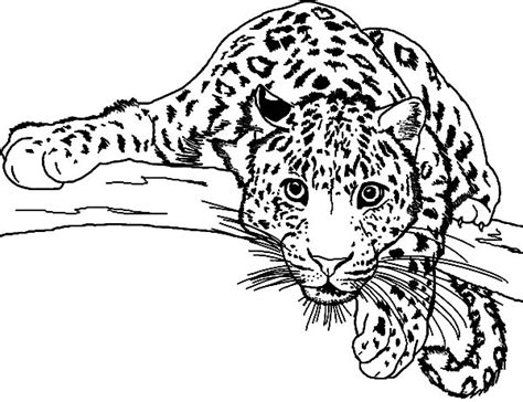 cute jaguar coloring pages baby snow leopard coloring coloring pages