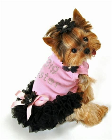 yorkie clothes 1000 images about yorkies on puppys nelly and so