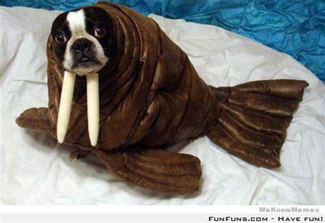 walrus pug walrus pug funfuns