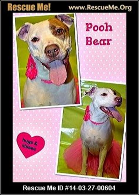 tennessee rescue tennessee rescue adoptions rescuemeorg upcomingcarshq