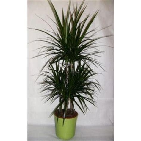 plantes d interieur faciles dans divers achetez au