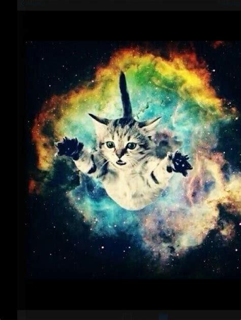 wallpaper galaxy cat 186 best cats in space images on pinterest cat art