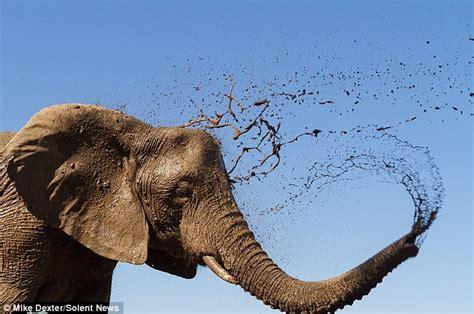 Baby Bath Shower Spray but mum i had a bath yesterday elephants splash around