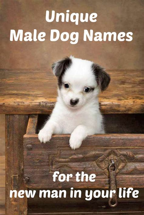 p names for dogs names top ideas for the popular puppy