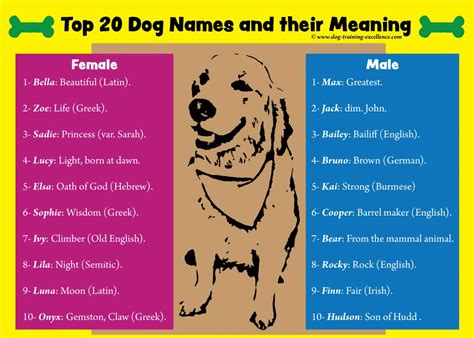 dog names  smart pets