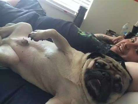 pug selfie the 15 most important pugs of 2015