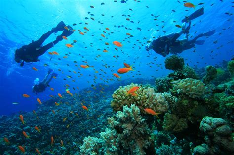 gili dive gili air guide f 252 r das insel paradies indonesiens