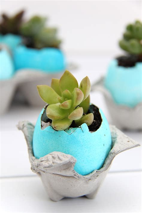 Eggshell Planters by Ombre Dyed Eggshell Succulent Planters Smashed Peas