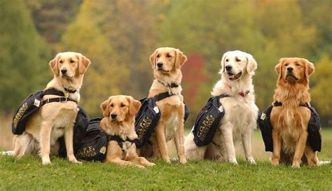 service dogs california cope for service dogs sponsor appreciation rotary club of palgrave