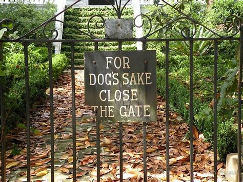 for dogs sake quot for s sake the gate quot dogs for dogs gates and dogs