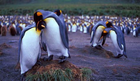 son los animales ms infieles a su pareja que nosotros taringa animales que mantienen su pareja para toda su vida hasta